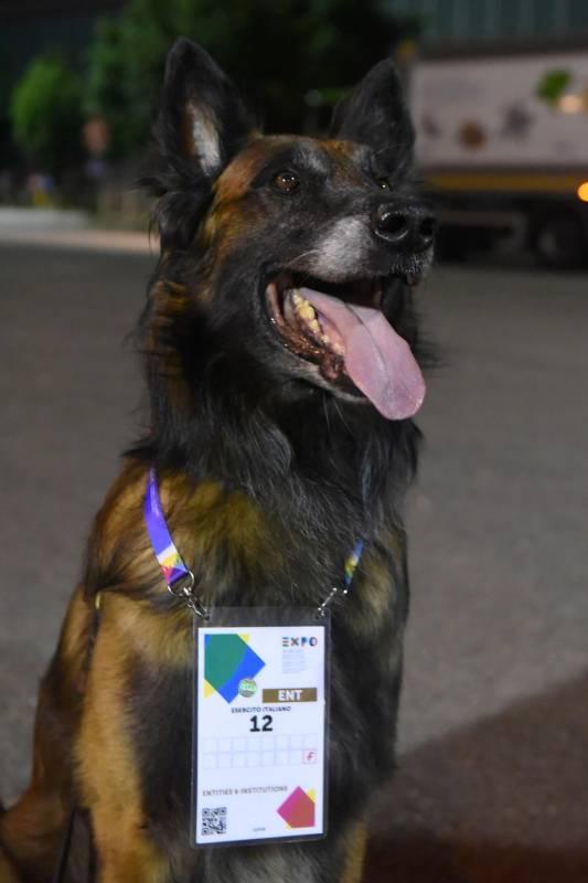 cane.expo