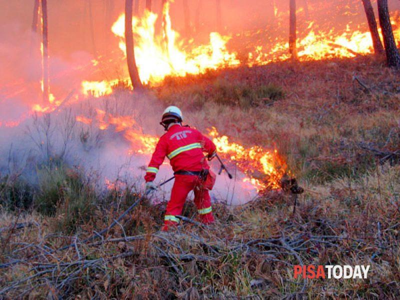 incendio-nel-bosco